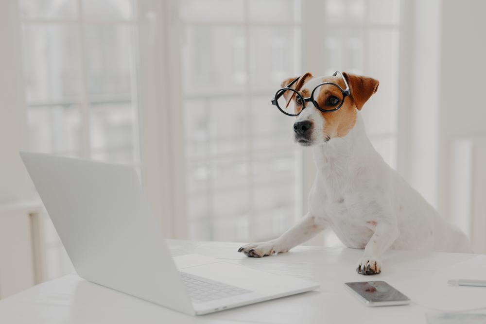 siteweb animaux