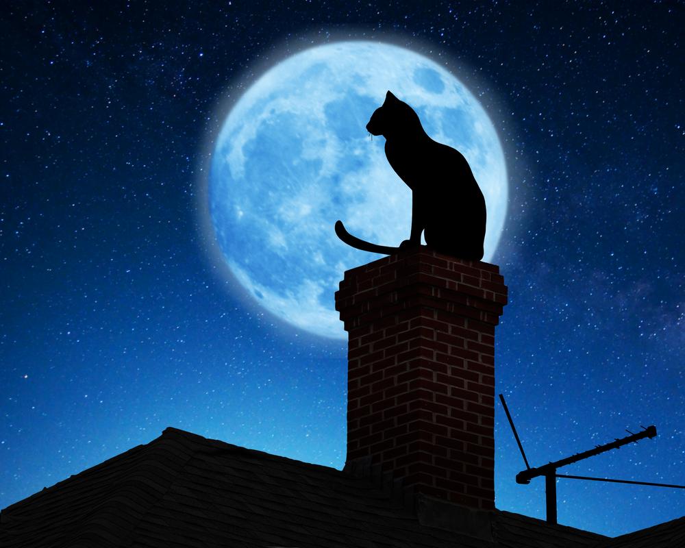 virée nocturne des chats